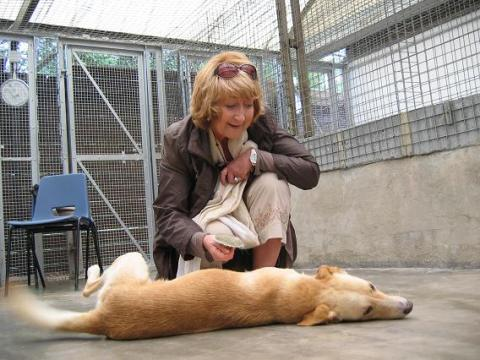 Togo in bliss during a brushing session with Jo