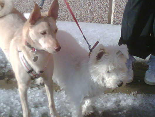Cold underfoot — Charley and Buddy on a hailstone glacier