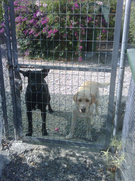 Flee and Salma at their front gate