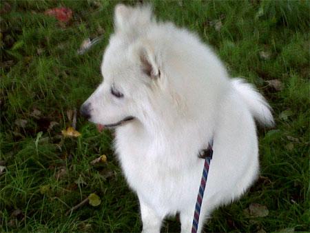 Oslo, rescue dog to Scotland