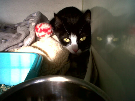Holly the cat moves to Abingdon