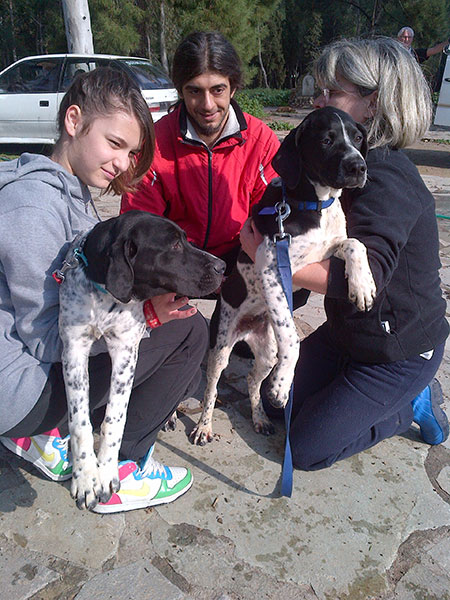 Pointer cross brothers Mutt (L, red collar) and Geoff (R, blue collar) from Skyros — we had to read their microchips to tell them apart!