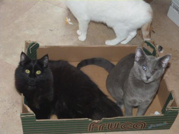 FABIO and his buddy MAXIPUSS manage to get the newly emptied box before the Bailey and Co realise