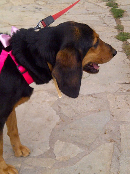 A closer look at Litza's fabulous ears