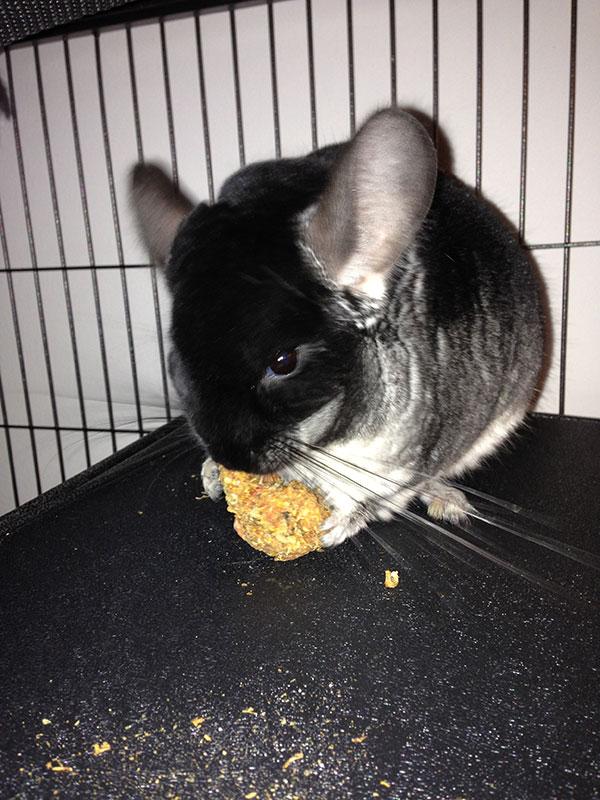 Ollie enjoys a delicious snack