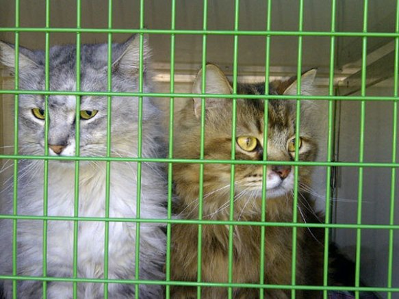 Oscar and Max are well travelled cats, who earlier in their lives moved from the middle east, where Charlotte had rescued them from a sanctuary.