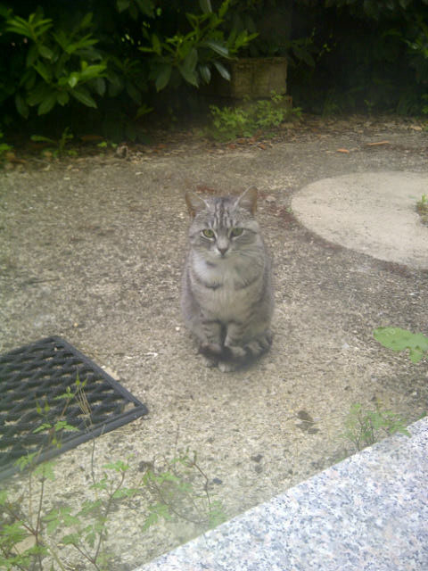 Oliver had spotted this cat, one of a group of feral cats that Maira feeds outside her surgery's back door