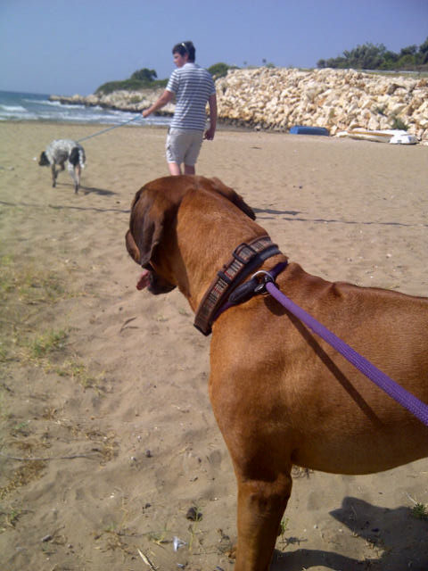 Bruno on the beach, with Sam and courier J2 in the distance