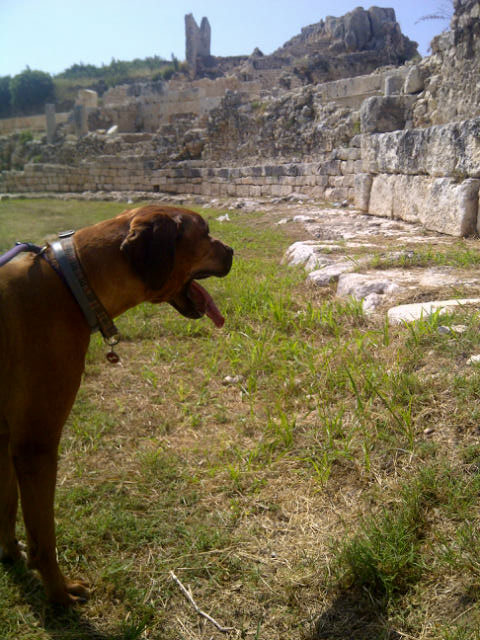 Bruno standing out against the Roman ruins…