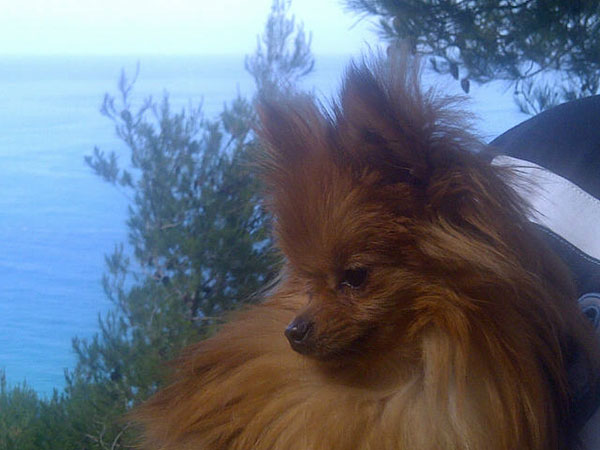 Lola, set off by blue skies and sea