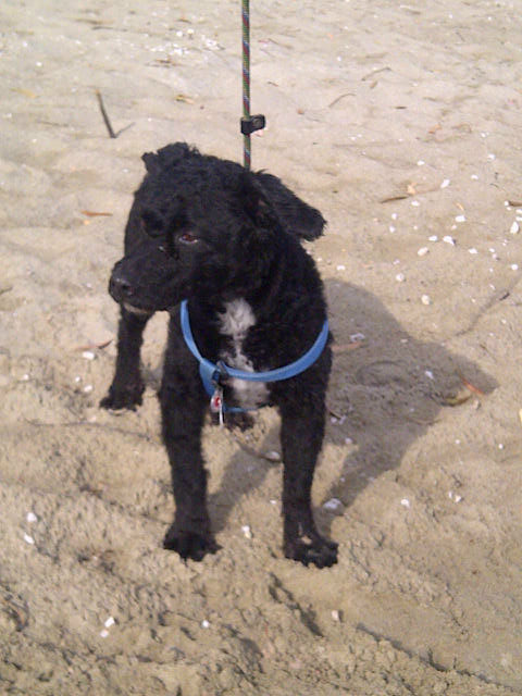 Meet Oliver, who belongs to Theo — Oliver joined us in Thessalonika and is travelling with us to Walsall in England