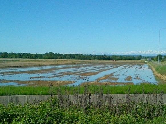 We woke to splendid views of mountains behind the paddy fields — it's hard to believe how much rice is grown in Italy