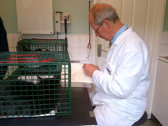 Mr Pooley the vet checks the paperwork