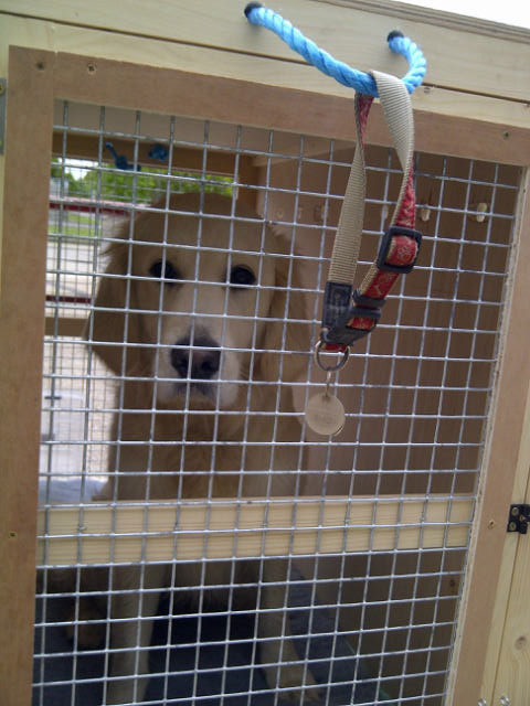 Maisie in her travel crate, getting close to departure time