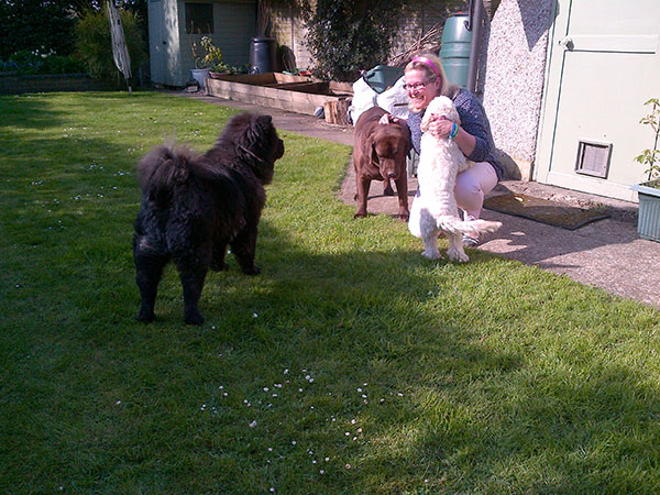 Hero with Lyn's dogs Arnie the Chow and Poppy the Cockerpoo