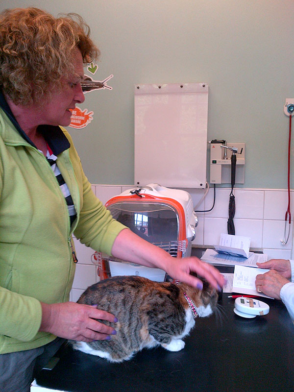 Spangle at the vet's with Courier S