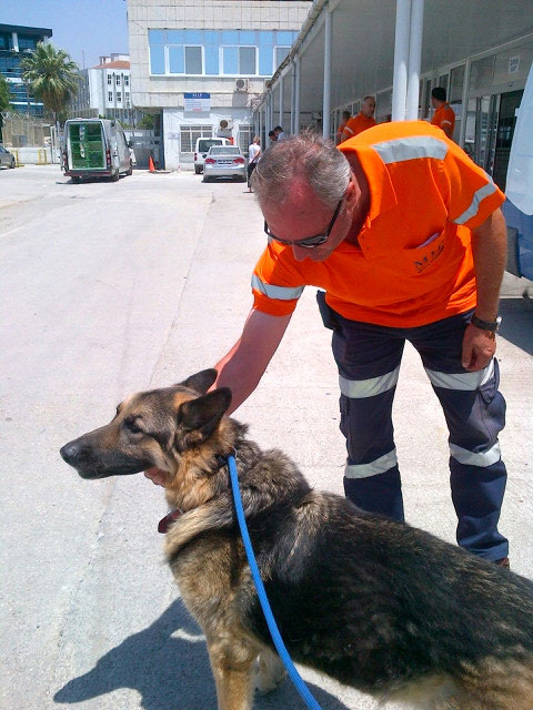"""On spotting Brandy, one of the port workers proudly told us: """"I have a dog like this."""""""