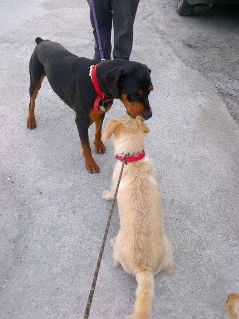 Roxy and Tink have a quick chat. Yes, we're very good at ports now, they agree
