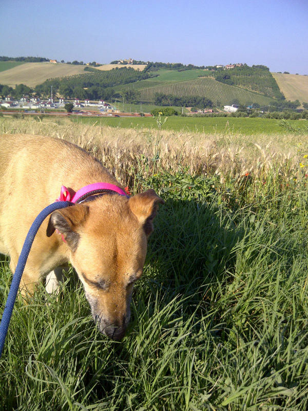 Maria enjoys a sniff in the grass