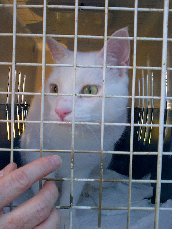 Snowy white Maja gets settled in. Maria was understandably both glad and sad to see them leave for their new homes