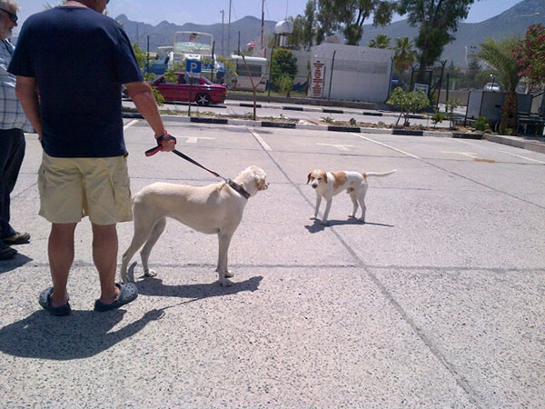 One of the street dogs that lives at the port comes to see what's going on — just one of the many hounds in North Cyprus who benefit from KAR's efforts to keep them healthy and fed