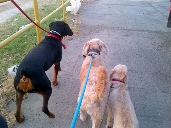Roxy, Jasper and Tink