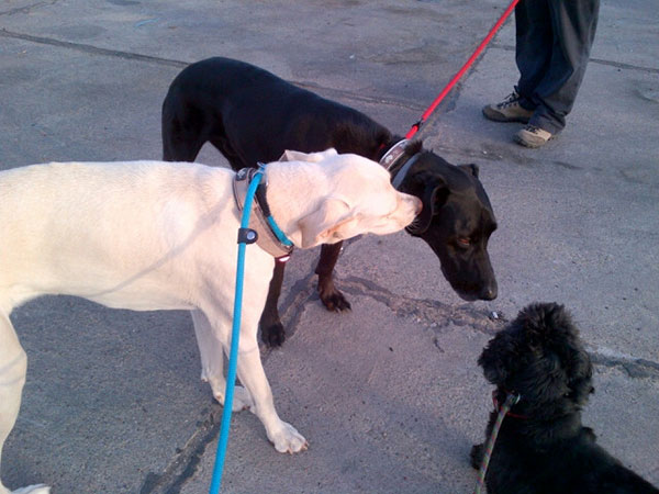 Reo meets Purdey and Cookie