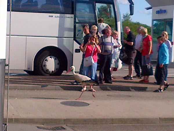 Stork at the petrol station