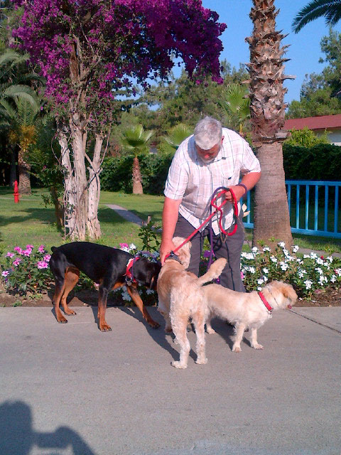 Courier M shows off his dog-wrangling skills, while Jasper, Tink and Roxy do their own thing!