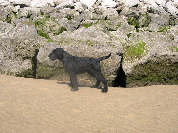 Tor enjoying his first trip to the beach