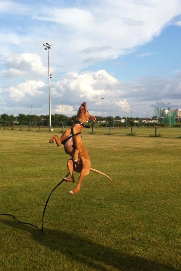How high can Pepe jump?