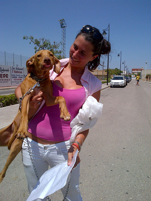 Handsome Pepe is an Andaluz Podenco. Here he is with Laura who's been looking after him for Ciara.