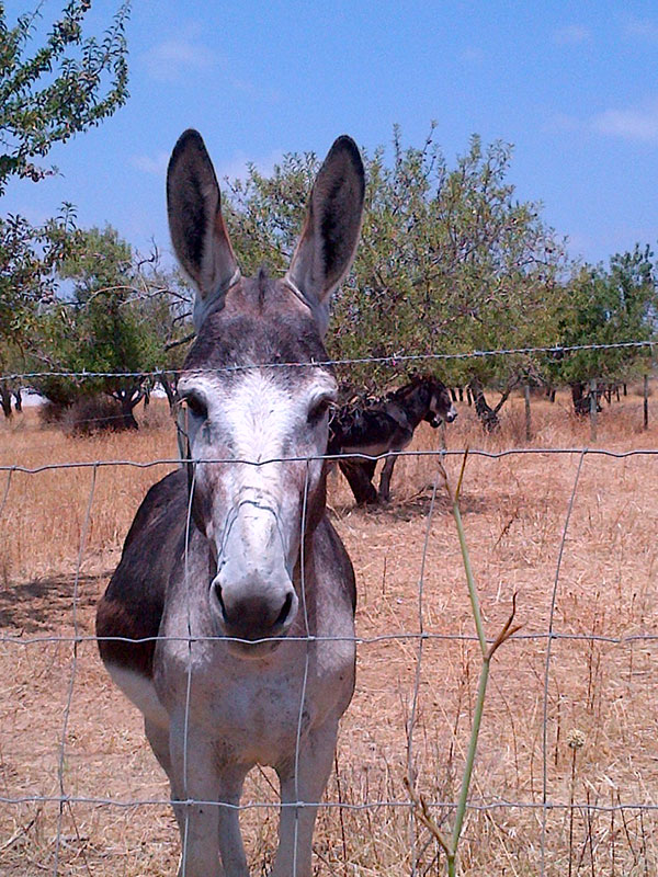 We had the honour of being inspected by a donkey when we dropped Mia off!