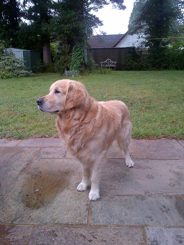 Olie's fine profile…