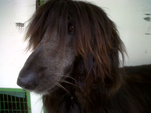 Nizze woke this morning in Bremen to a bit of a bad hair day!