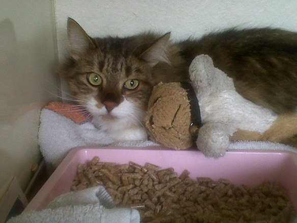 Ali cuddling up to his soft toy dog. Looking at him now, it's hard to believe he was found on the streets as an abandoned kitten.