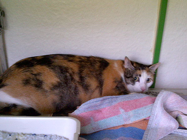 Also travelling with us from Madrid are pretty tortoiseshell (calico) Baby…
