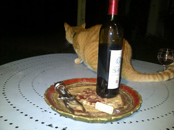 What service! A fine ginger tabby keeping us company over a glass of wine