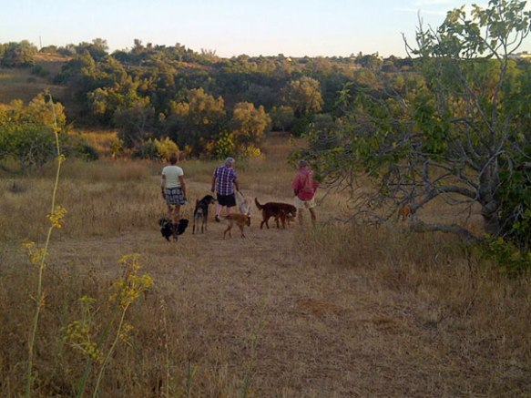 Striding out with our canine chums