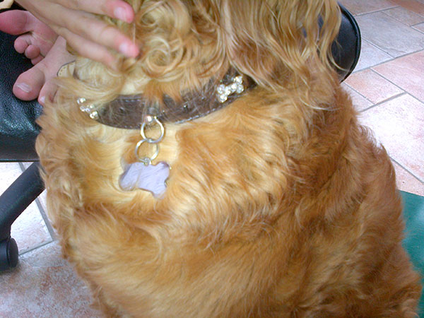 We're very taken with the diamante bones on her collar!