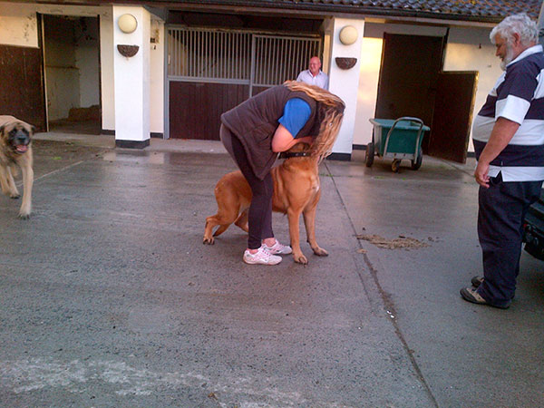 Karen greeting the first Bull Mastiff out of the van
