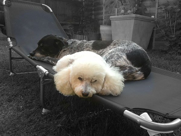 Maggie and Becky relaxing together in the garden…