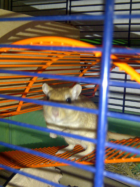Our gerbil passengers showing off their brightly coloured cages