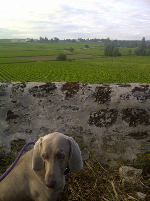 Jake is rather beautifully set off by the vineyards behind him