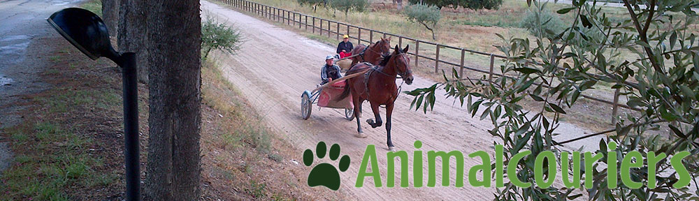 on the road with Animalcouriers