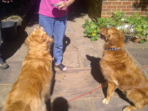 Biscuit bribery to get Charlie and Amber to sit still