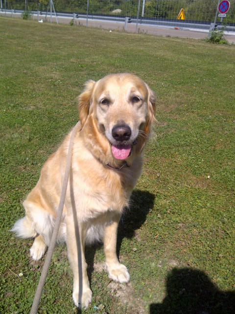 Sammy — we all know what a soft spot courier M has for Golden Retrievers!