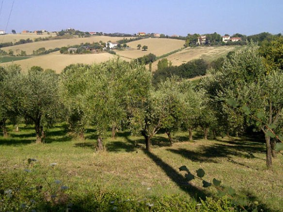 A wonderful view over just a handful of the olive trees