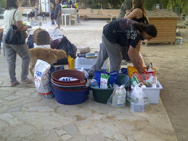 Filozoikos volunteers sort through the goodies, as Loretta and Sammy look on