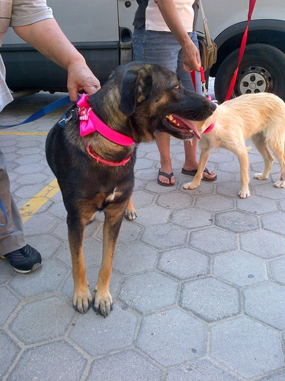 Lovely Carolina has an excited family waiting for her in the UK